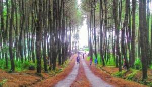 65 Daftar Tempat Wisata Hits Di Magelang Jawa Tengah